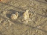acqua borra nasce nuova sorgente termale (5)