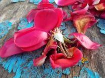 petali rosa barca vertine (21)