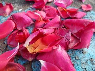 petali rosa barca vertine (22)
