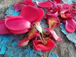 petali rosa barca vertine (25)