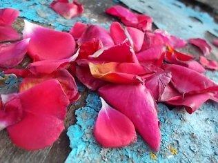 petali rosa barca vertine (26)