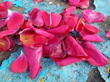 petali rosa barca vertine (27)