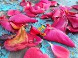 petali rosa barca vertine (28)
