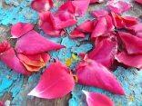 petali rosa barca vertine (29)