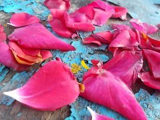 petali rosa barca vertine (30)