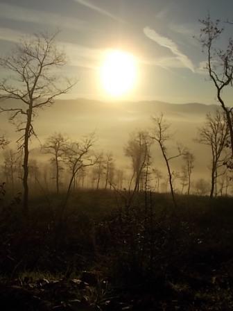 vertine, spaltenna nebbia 16 gennaio (10)