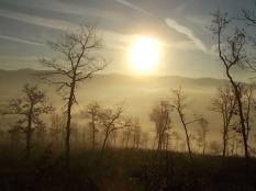 vertine, spaltenna nebbia 16 gennaio (11)