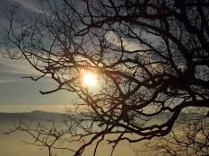 vertine, spaltenna nebbia 16 gennaio (13)