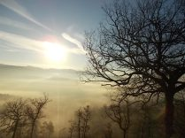 vertine, spaltenna nebbia 16 gennaio (17)