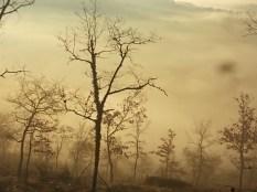 vertine, spaltenna nebbia 16 gennaio (6)