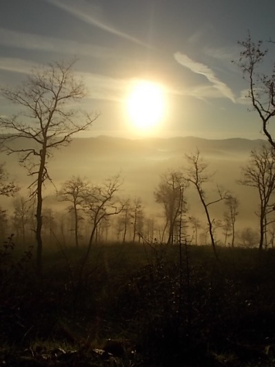 vertine, spaltenna nebbia 16 gennaio (9)