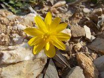 giallo (1)