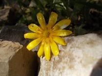giallo (2)
