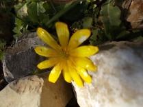 giallo (3)