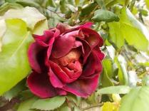 rosa-e-scarlatta-4.jpg