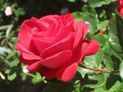 rosa-pagliantini-4.jpg