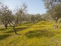 vertine campo fiori gialli (12)