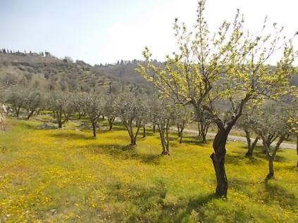 vertine campo fiori gialli (15)
