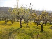 vertine campo fiori gialli (16)