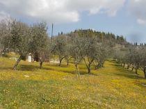 vertine campo fiori gialli (20)