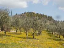 vertine campo fiori gialli (21)