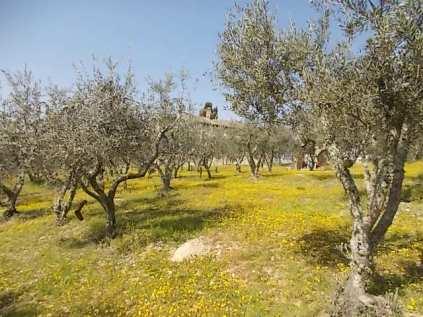 vertine campo fiori gialli (26)