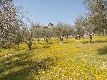 vertine campo fiori gialli (27)