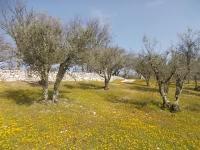 vertine campo fiori gialli (3)