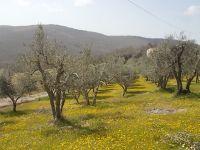 vertine campo fiori gialli (4)