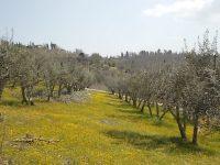 vertine campo fiori gialli (6)