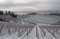 vertine-neve-23-gennaio-2019-44.jpg