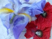 giaggiolo e papavero (4)