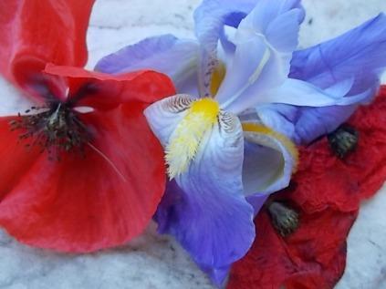 giaggiolo e papavero (7)