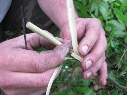 innesto a zufolo del castagno (3)