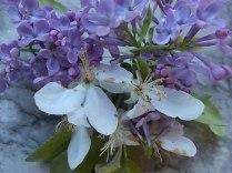 lilla e melo (3)