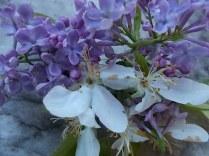 lilla e melo (5)