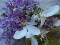 lilla e melo (8)