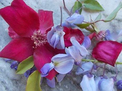 rosella e glicine (12)