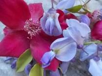 rosella e glicine (14)
