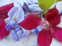 rosella e glicine (2)