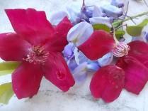 rosella e glicine (3)