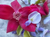 rosella e glicine (5)