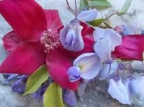 rosella e glicine (6)