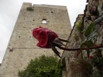 bocciolo di rosa vertine (1)