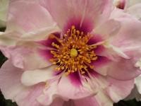 imbottigliare in letizia rose e chianti (11)