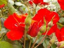 imbottigliare in letizia rose e chianti (13)