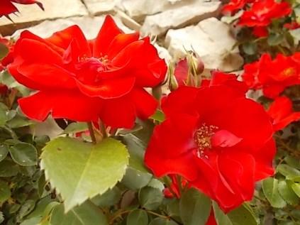 imbottigliare in letizia rose e chianti (14)