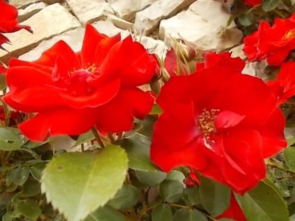 imbottigliare in letizia rose e chianti (15)