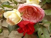 imbottigliare in letizia rose e chianti (16)
