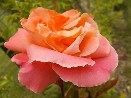 imbottigliare in letizia rose e chianti (17)